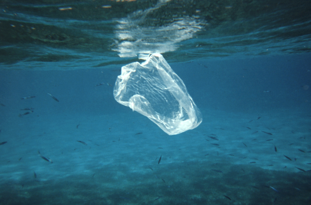 Help Clean Up the Ocean - Donate beverage containers at Regional Recycling